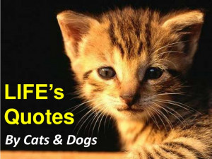 Life's Quotes By Cats & Dogs