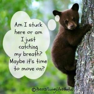 Baby bear quote via Living Life at www.Facebook.com/LivingLife2theFull