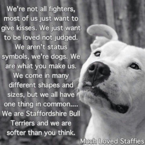 Pitbull Love Quotes | love my pit bull