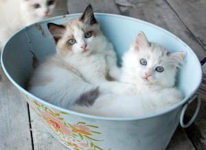 Cuddle buddies. - Show Viral
