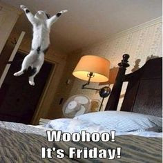 Woohoo It's Friday quotes quote cat friday happy friday tgif days of ...