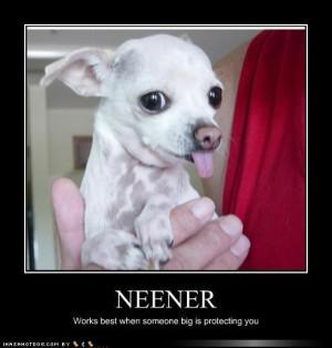 ... /09/Funny-Cute-Chihuahua-chihuahuas-13582291-492-516.jpg[/img][/url