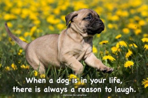 When a dog is in your life, there is always a reason to laugh ...
