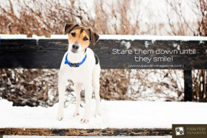 dog companionship quotes inspirational quotes dogs funny life bad hair