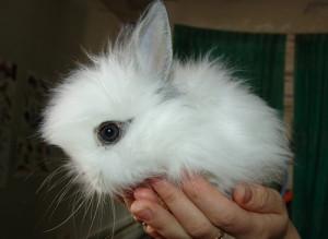 Funny fluffy rabbits