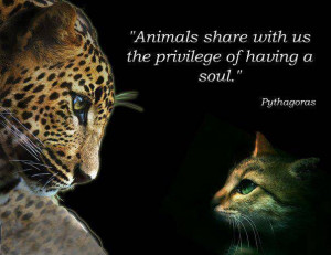 Animals... - Thoughtfull quotes Picture