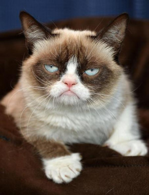 Grumpy Cat Voir les 5 photos de l'article