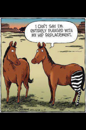 Hip Replacement/Paul Feb 2013.
