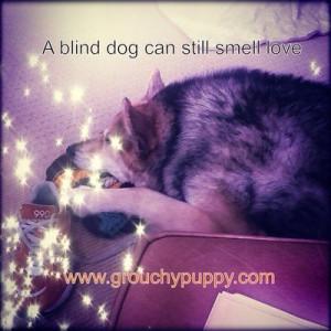 Found on dogdays.grouchypuppy.com