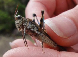 When You Can Take the Grasshopper From My Hand…