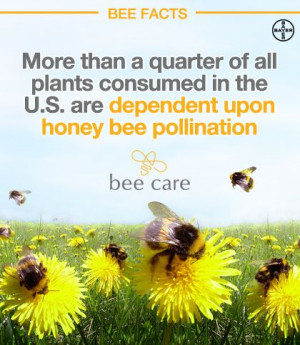 ... education and awareness about the importance of honey bees and