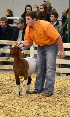 Livestock Show. I judge people who show, and how this goat isn't set ...