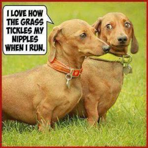 dog-grass-tickles-nipples-1.jpg