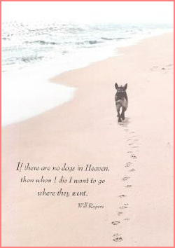 Pet Sympathy Card Quotes