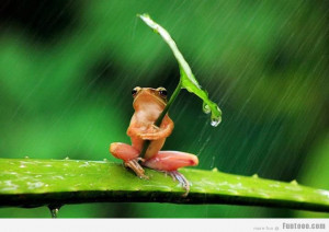 Go Back > Gallery For > Rain Funny Animals