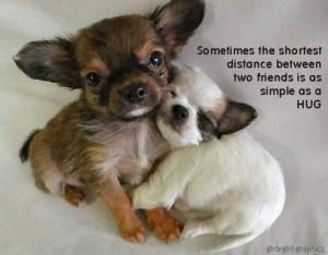 puppy quotes - teddybear64 Photo