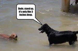 funny-animal-pics-with-funny-sayings-4.jpg