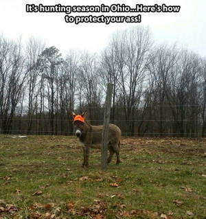 funny-picture-hunting-season-donkey-hat