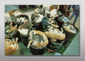 Dead Cats and Dogs at a shelter. Photographer: unknown.