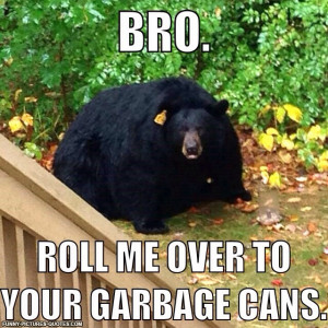 Obese Bear   Funny Pictures and Quotes