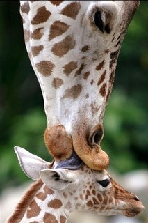 mother's kiss beautiful-things-quotes