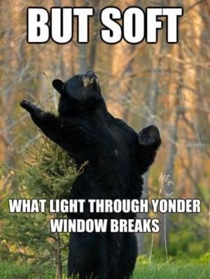 Funny Bear (51)