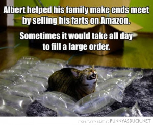 funny cats that fart