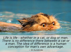 life is life - whether in a cat sri aurobindo