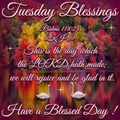 Tuesday Blessings. More