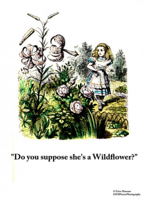 Do You Suppose She's A Wildflower?- | Alice in Wonderland Quotes ...