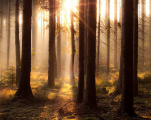 beautiful, forest, hot, sun, tree, warm, wood