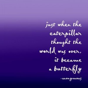 butterfly quote photo butterfly-2.jpg