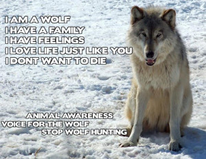 am a wolf. I have a family. I have feelings. I love life just like ...