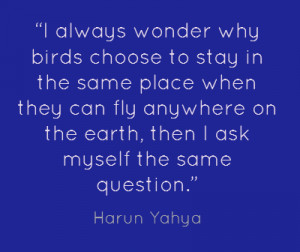 ... Birds Choose To Stay In The Same Place When They Can Fly - Birds Quote