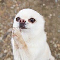 funny-praying-chihuahua-dog-pic.jpg