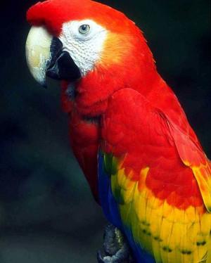 Amazon Rainforest Animals Birds