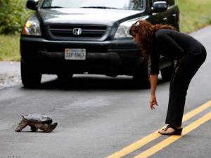 نريد العبور 2013 ، صور عبور الحيوانات 2013 ...