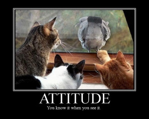 attitude-you-know-it-when-you-see-it-attitude-quote.jpg