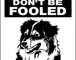 AUSTRALIAN SHEPHERD Dog Sign 9