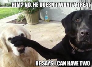 Labrador Dog Meme Caption Picture