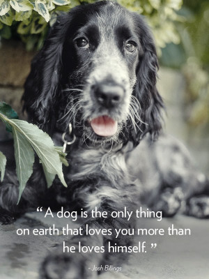 home quotes 16 dog quotes that will melt your heart