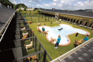 In addition to kennel services, the facility offers training classes ...