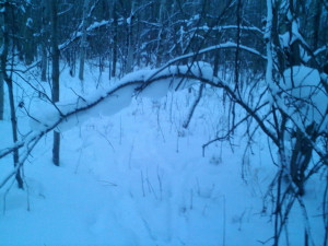 Good Luck Deer Hunting Quotes It as i was not hunting,