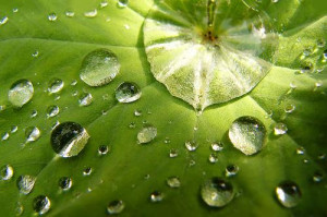 Love comforteth like sunshine after rain. Love Quotes From Shakespeare ...