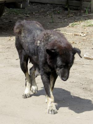 Animals Dogs Sick Dog