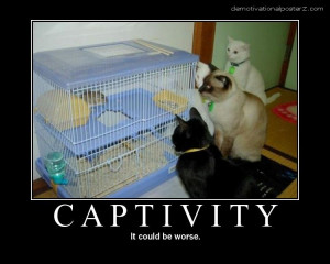 Captivity - it could be worse