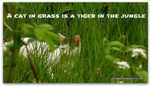 quote cat lion jungle grass Tiger Quotes