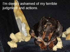 funny dachshund caption | quote from the Anthony Wiener apology. More