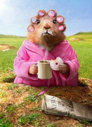 Good Morning squirrel!