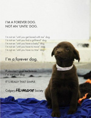 "... am a forever dog. Not an ""until"" dog."" (you can see more here"